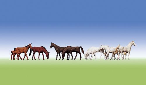 Pferde