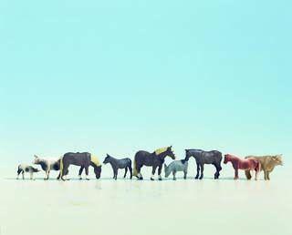 Tiere auf dem Bauernhof II