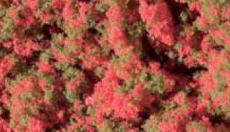 Blumenmatte
