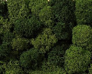 Dekormoos hell & dunkelgrün