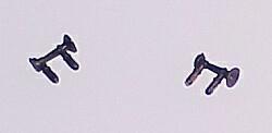 N Air Horn 1-chime, long
