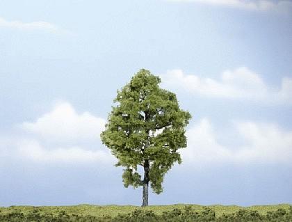 Premium Baum Nussbaum