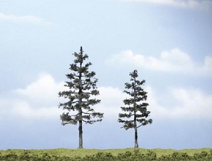 Premium Baum Kiefer