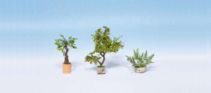 Zierpflanzen in Blumentöpfen
