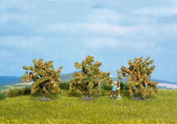 Orangenbäume (3 Stück)