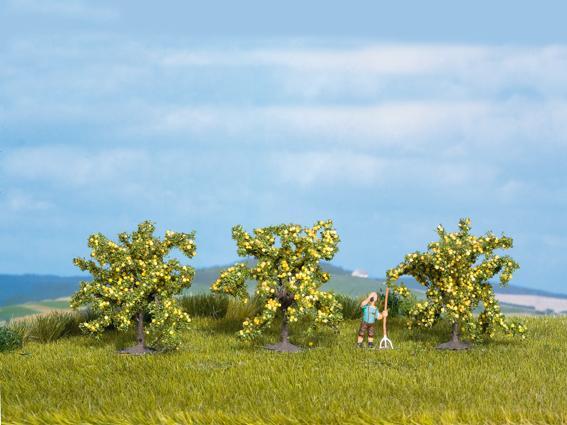 Zitronenbäume (3 Stück)