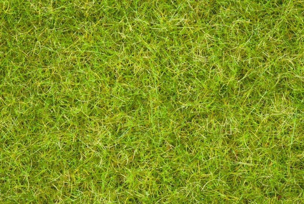 Grasmischung Sommerwiese (100g Dose)