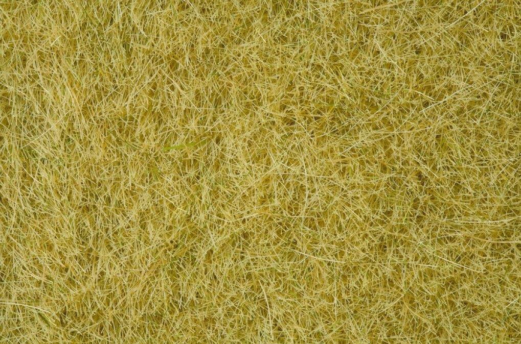 Wildgras, beige (100g Dose)