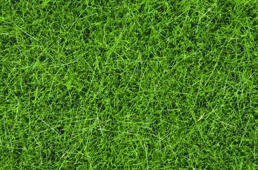 Wildgras, dunkelgrün (100g Dose)