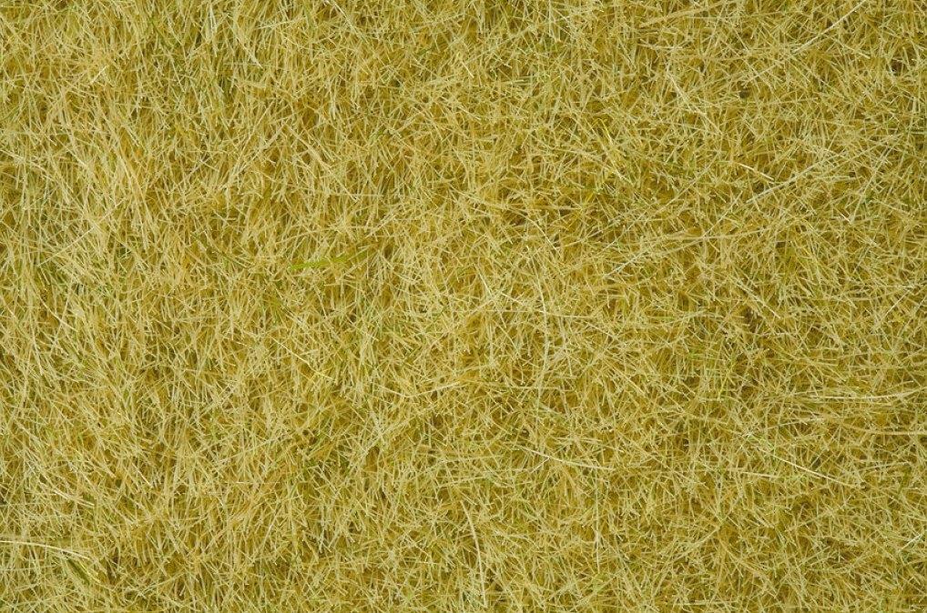 Wildgras XL, beige (80g Dose)