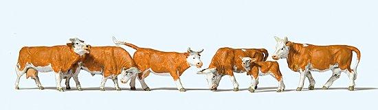 Kühe, braun gefleckt
