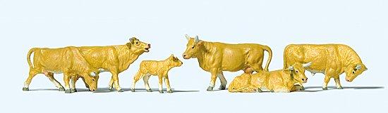 Kühe, hellbraun