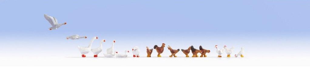 Hühner und Gänse