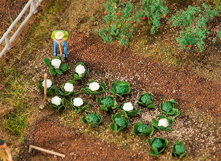 10 Grün- und 10 Blumenkohlköpfe