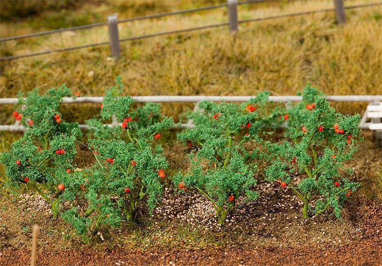 18 Tomatenpflanzen