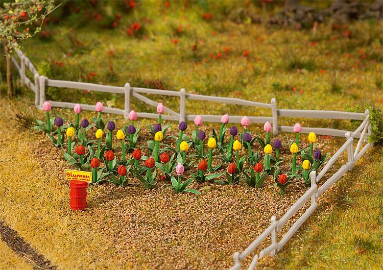 48 Tulpen