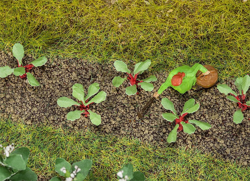 28 Rhabarberpflanzen