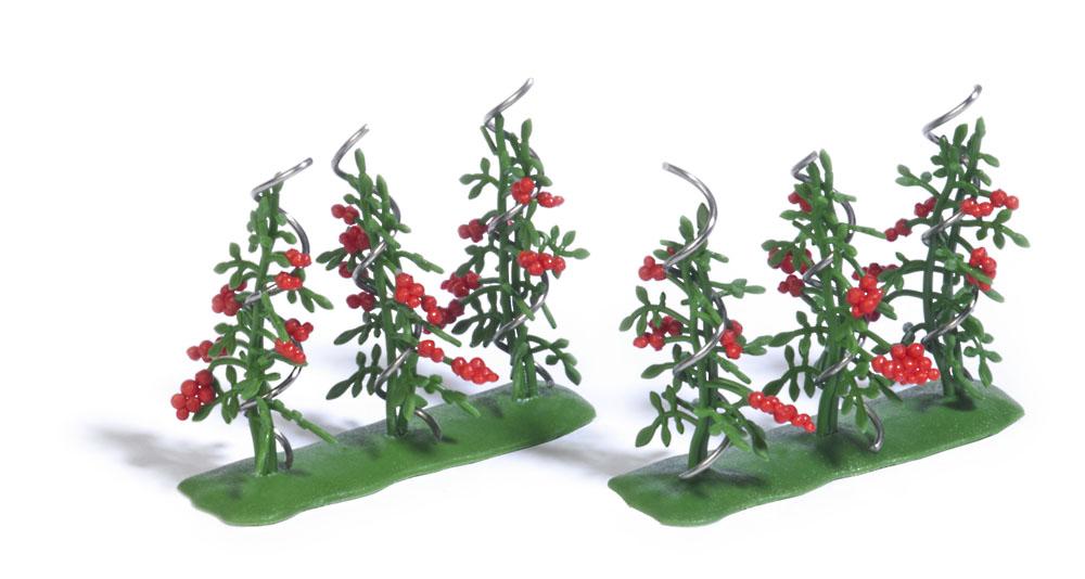 6 Tomatenpflanzen