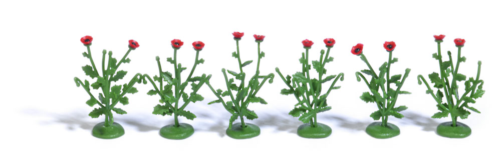 6 Klatschmohnpflanzen