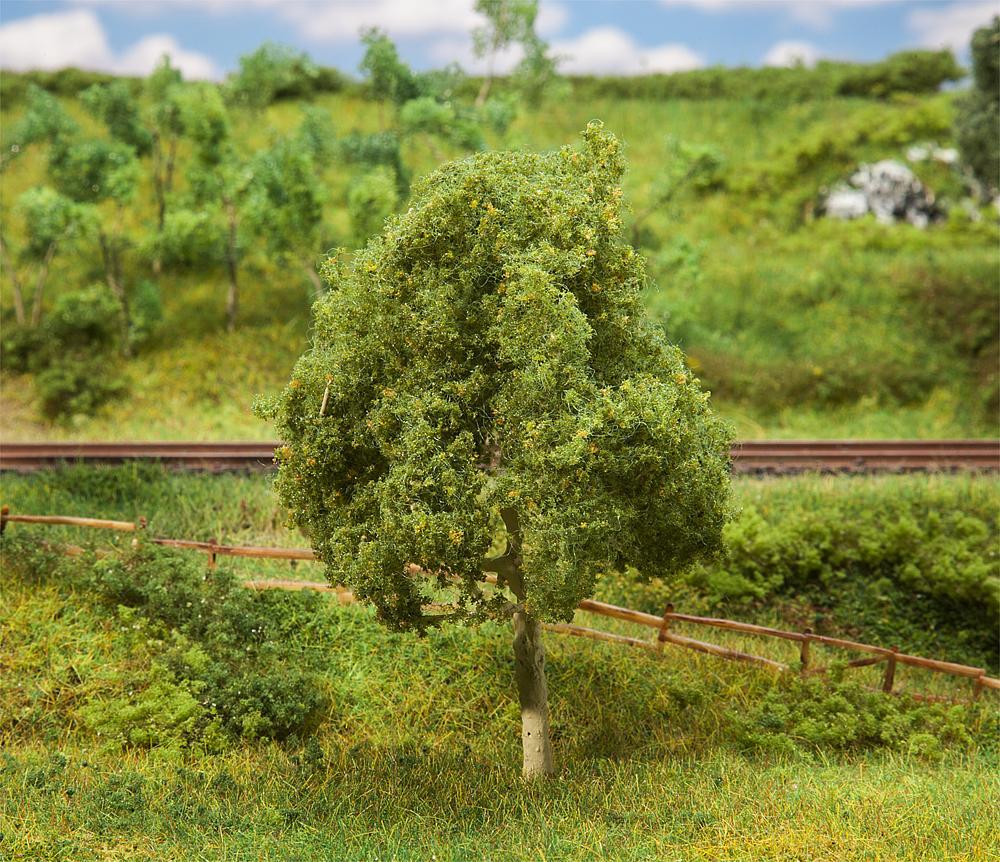 Premium Walnussbaum