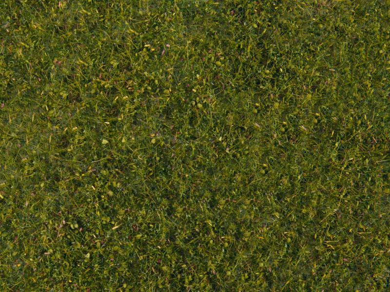 Wiesen-Foliage, mittelgrün