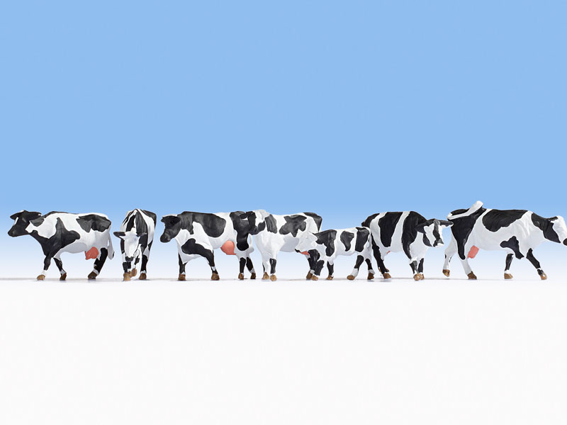 Kühe, schwarz-weiß
