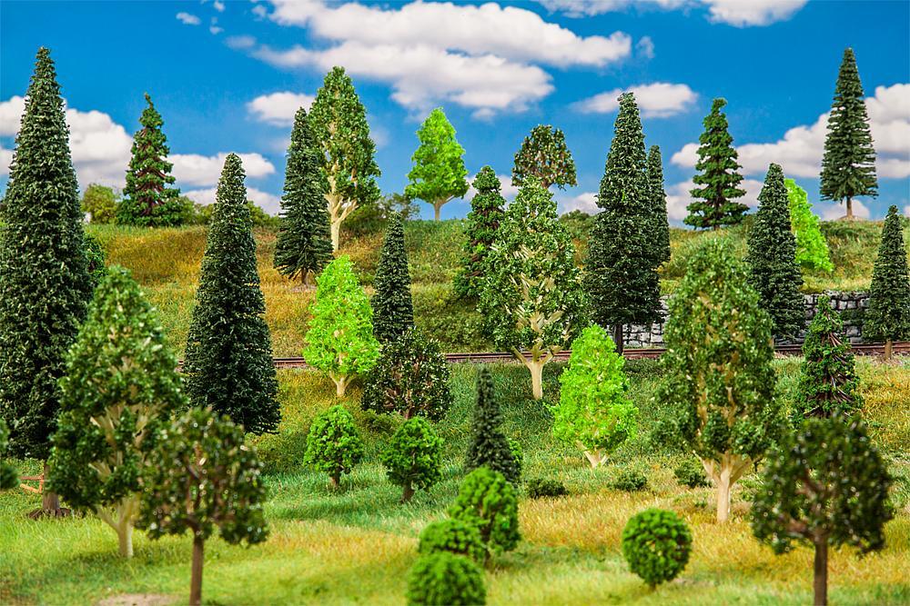 10 Mischwaldbäume, sortiert