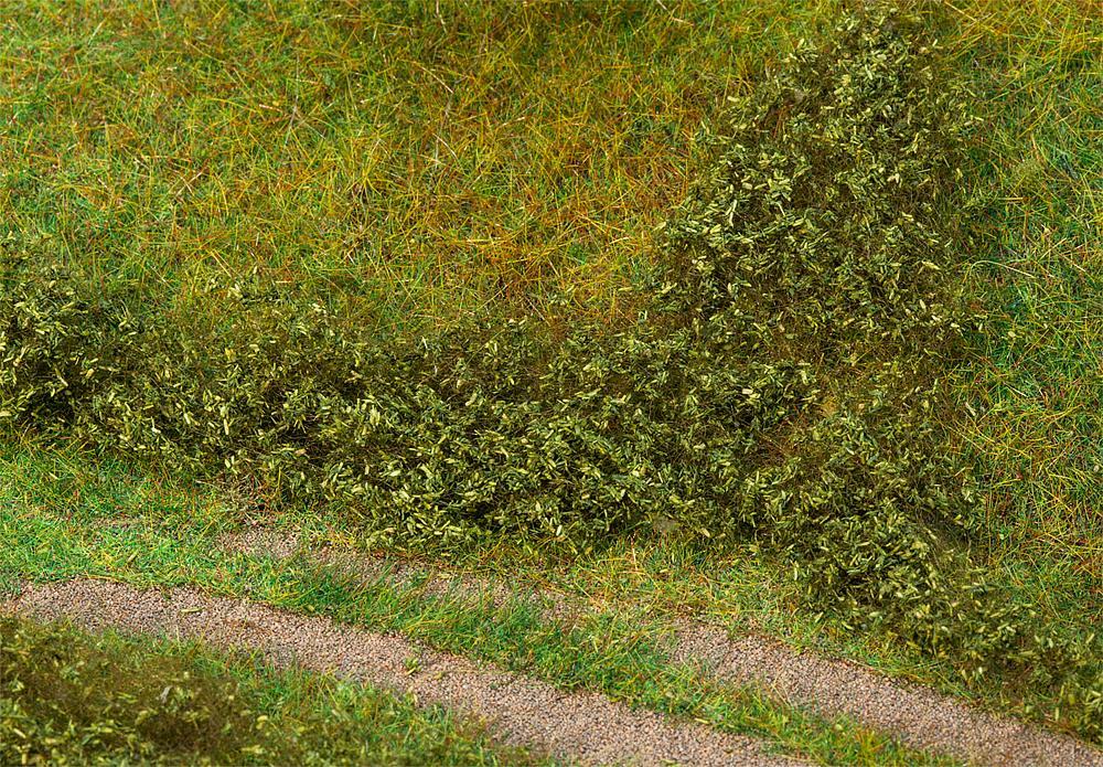 Blätterfoliage, sommergrün