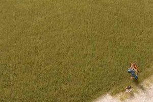 Grasfasern oliv